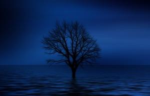tree-738816_1920